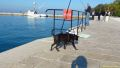 daaam_2012_zadar_album_blaz_stefe_013