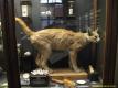 2nd_bstu_visit_naturhistorisches_museum_016