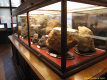 2nd_bstu_visit_naturhistorisches_museum_024