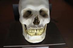 2nd_bstu_visit_naturhistorisches_museum_031