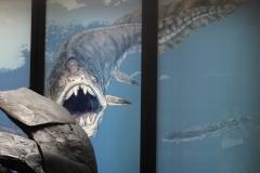 2nd_bstu_visit_naturhistorisches_museum_042