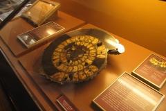 2nd_bstu_visit_naturhistorisches_museum_045
