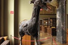 2nd_bstu_visit_naturhistorisches_museum_050