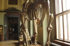 2nd_bstu_visit_naturhistorisches_museum_051
