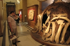 2nd_bstu_visit_naturhistorisches_museum_061