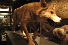 2nd_bstu_visit_naturhistorisches_museum_062