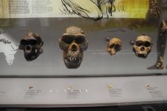 2nd_bstu_visit_naturhistorisches_museum_074
