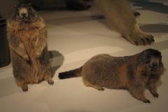 2nd_bstu_visit_naturhistorisches_museum_075